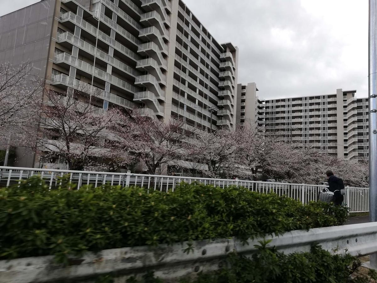 愛知県内でペットと遊ぶ:黒川桜まつり 多奈波太神社