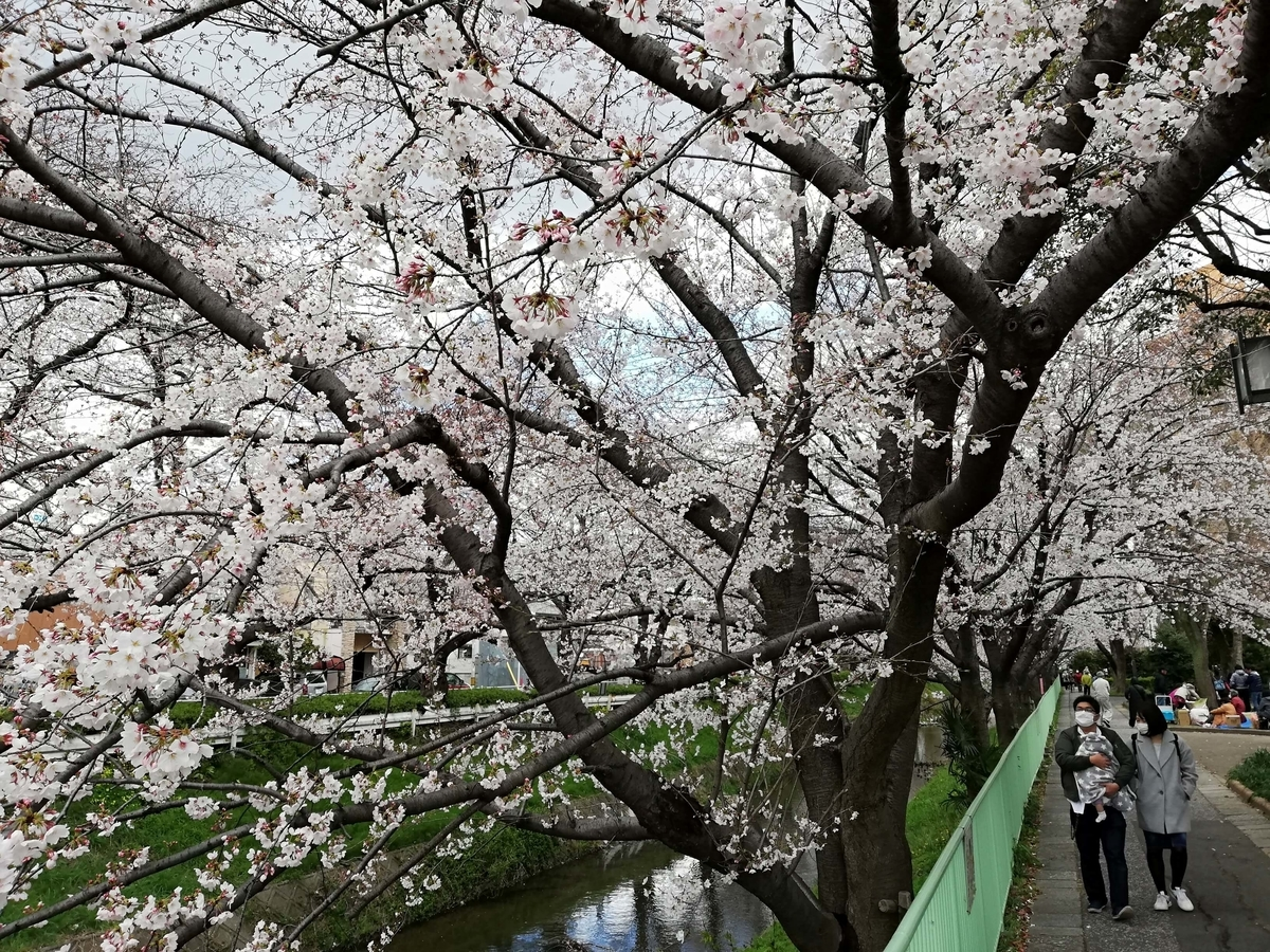 愛知県内でペットと遊ぶ:黒川桜まつり 上飯田駅に向かう
