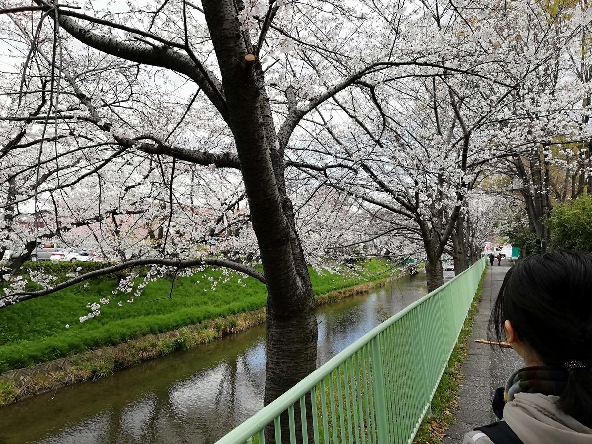 愛知県内でペットと遊ぶ:黒川桜まつり 五平餅