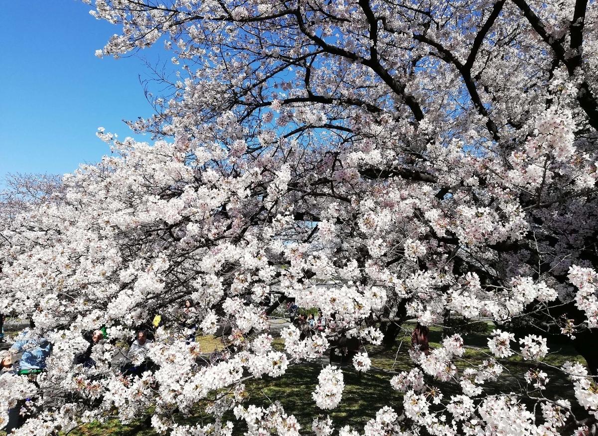愛知県内でペットと遊ぶ:名古屋城桜まつり 名城公園彫刻の庭