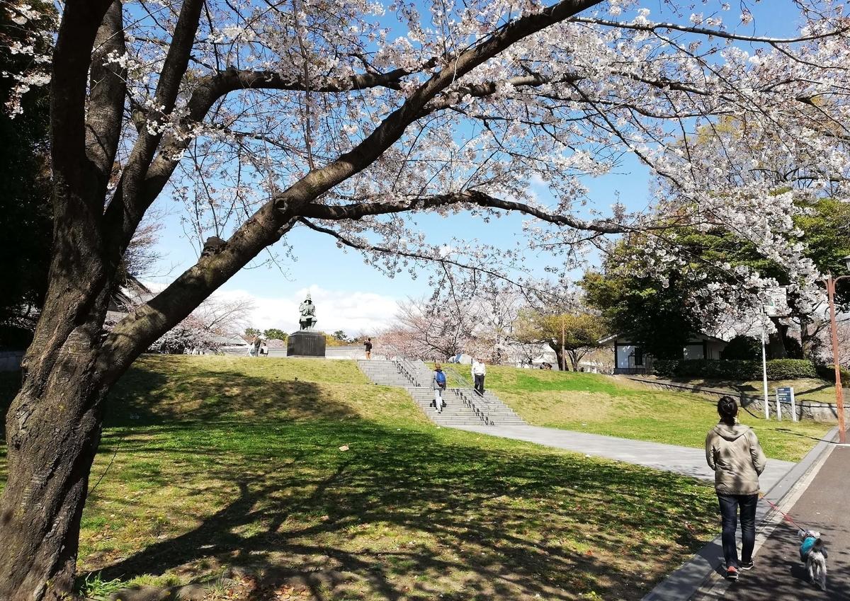 愛知県内でペットと遊ぶ:名古屋城桜まつり 加藤清正公???