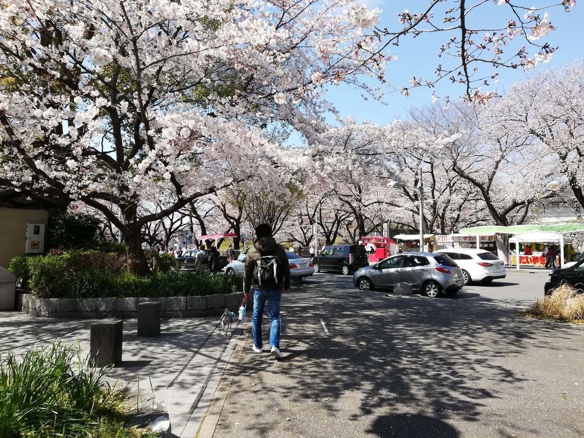 愛知県内でペットと遊ぶ:名古屋城桜まつり