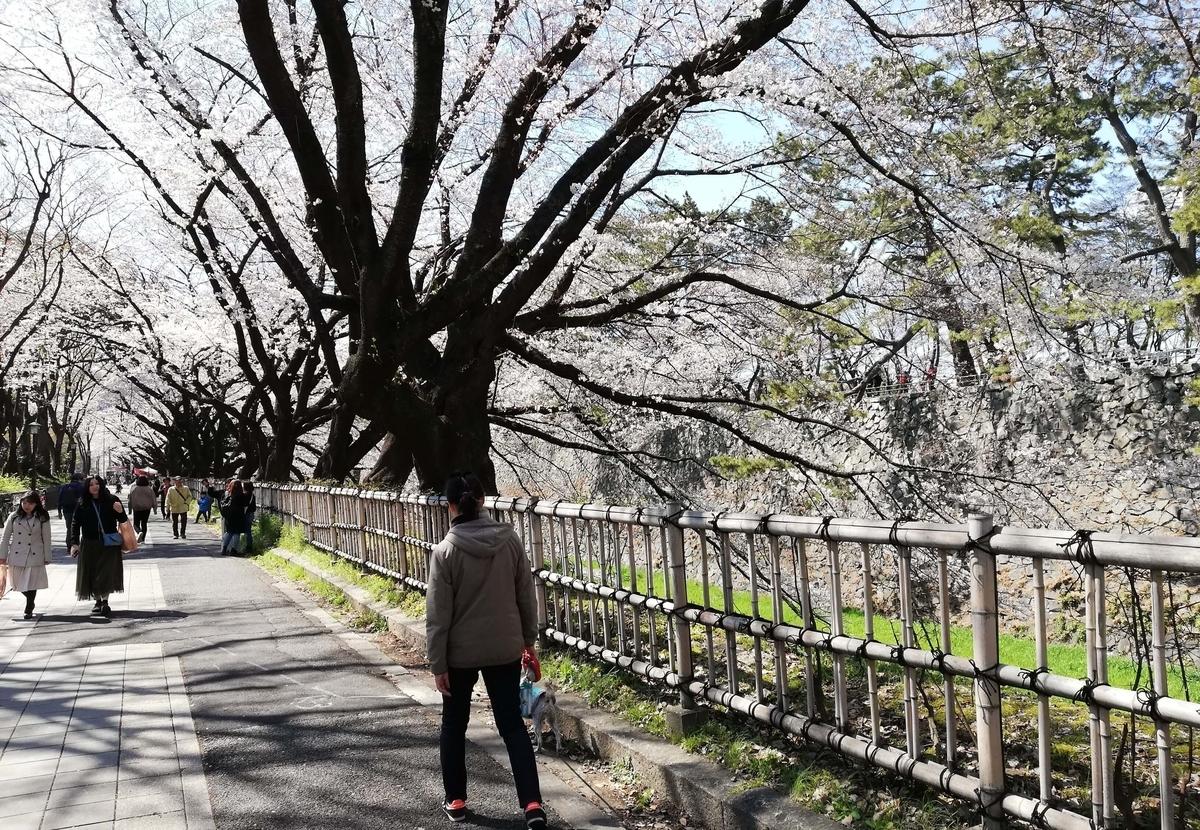 愛知県内でペットと遊ぶ:名古屋城桜まつり 桜のトンネル