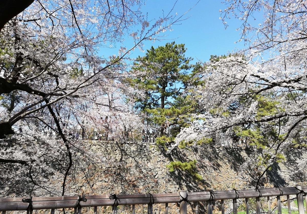 愛知県内でペットと遊ぶ:名古屋城桜まつり 塀の向こうが名古屋城