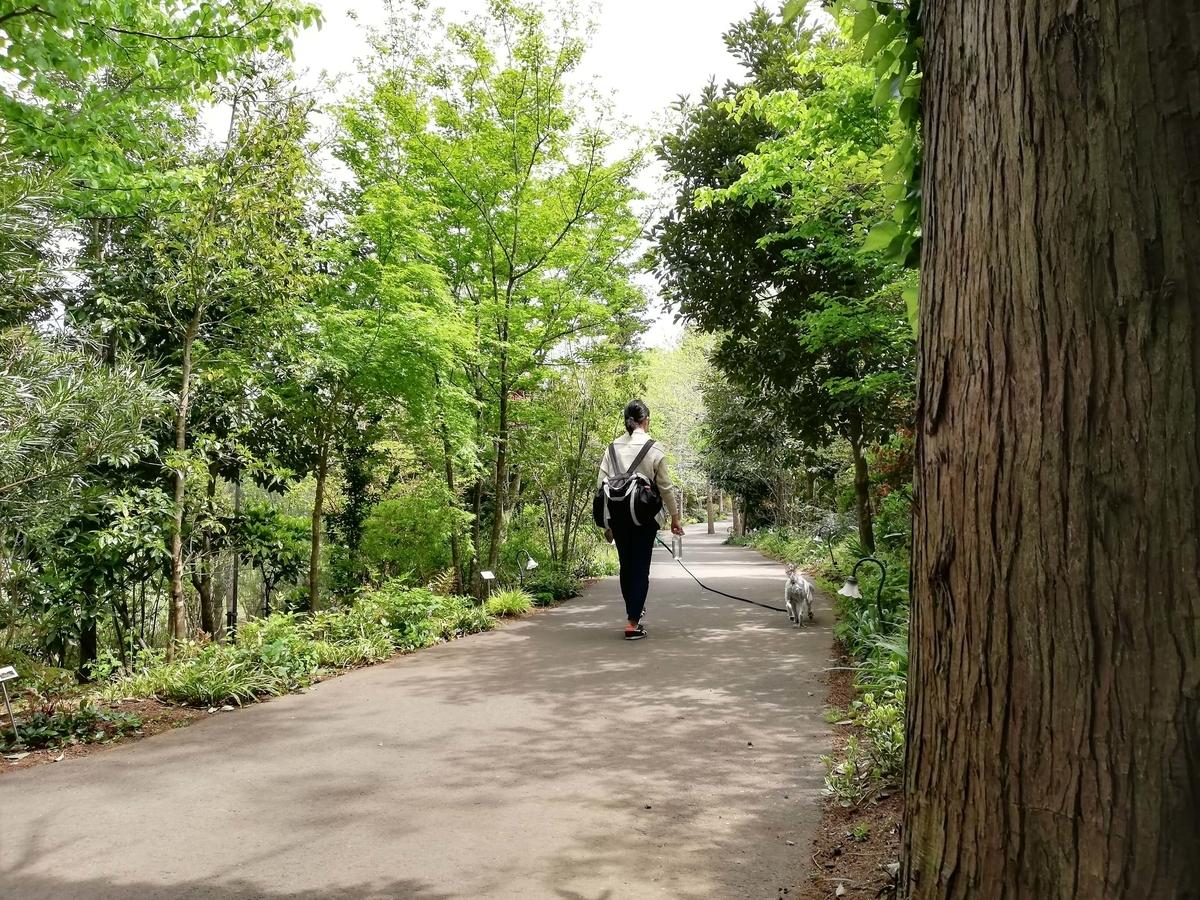 千葉県八街市:小谷流の里ドギーズアイランド 四季の花径