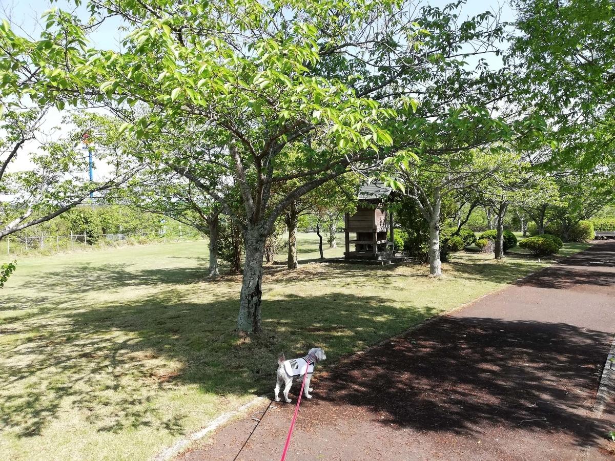千葉県横芝光町:光スポーツ公園 公園内をめぐる