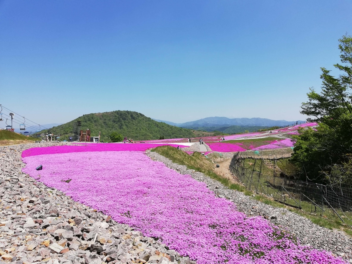 愛知県内でペットと遊ぶ:茶臼山高原 芝桜の丘をペットと歩く