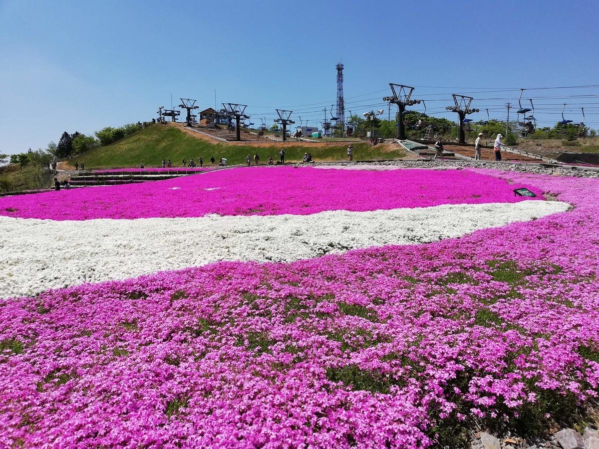 愛知県内でペットと遊ぶ:茶臼山高原 芝桜
