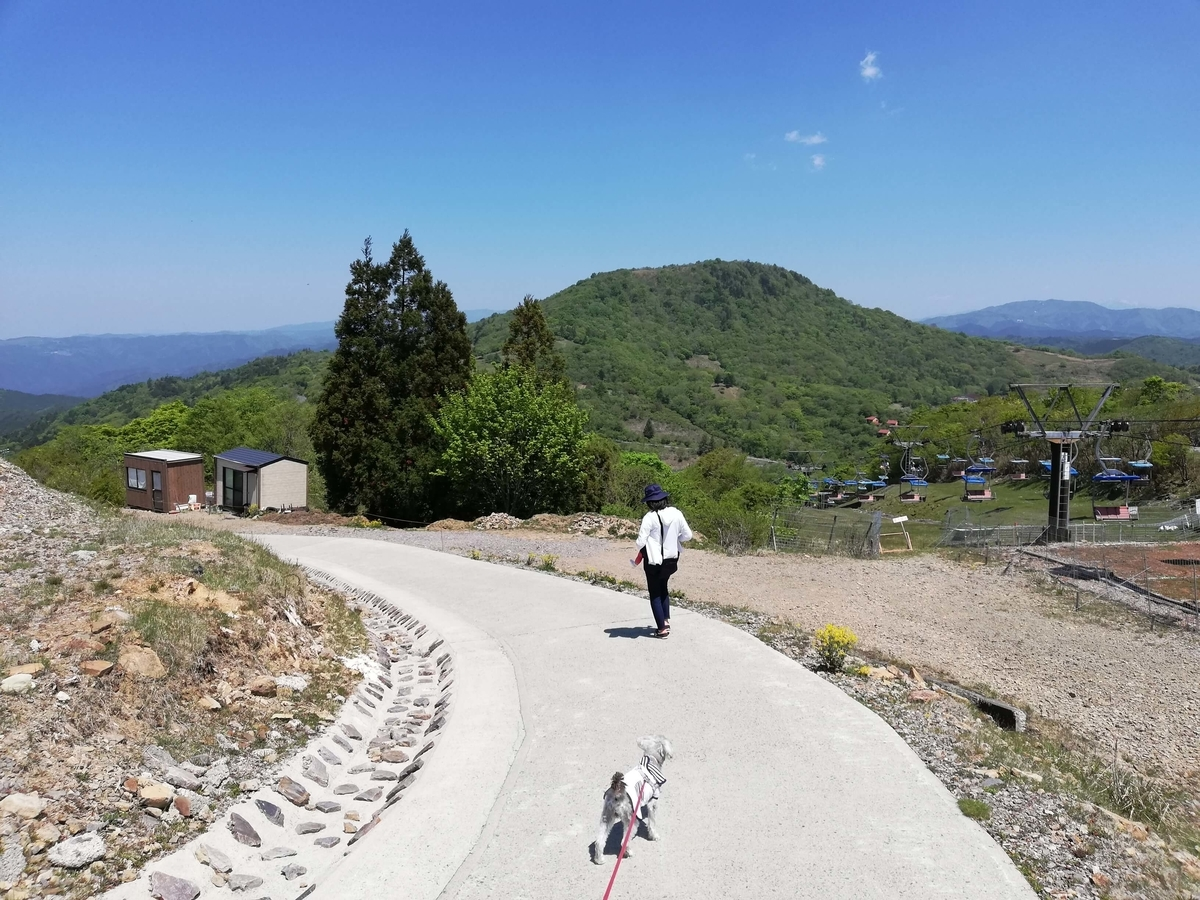 愛知県内でペットと遊ぶ:茶臼山高原 ペットと走り回る