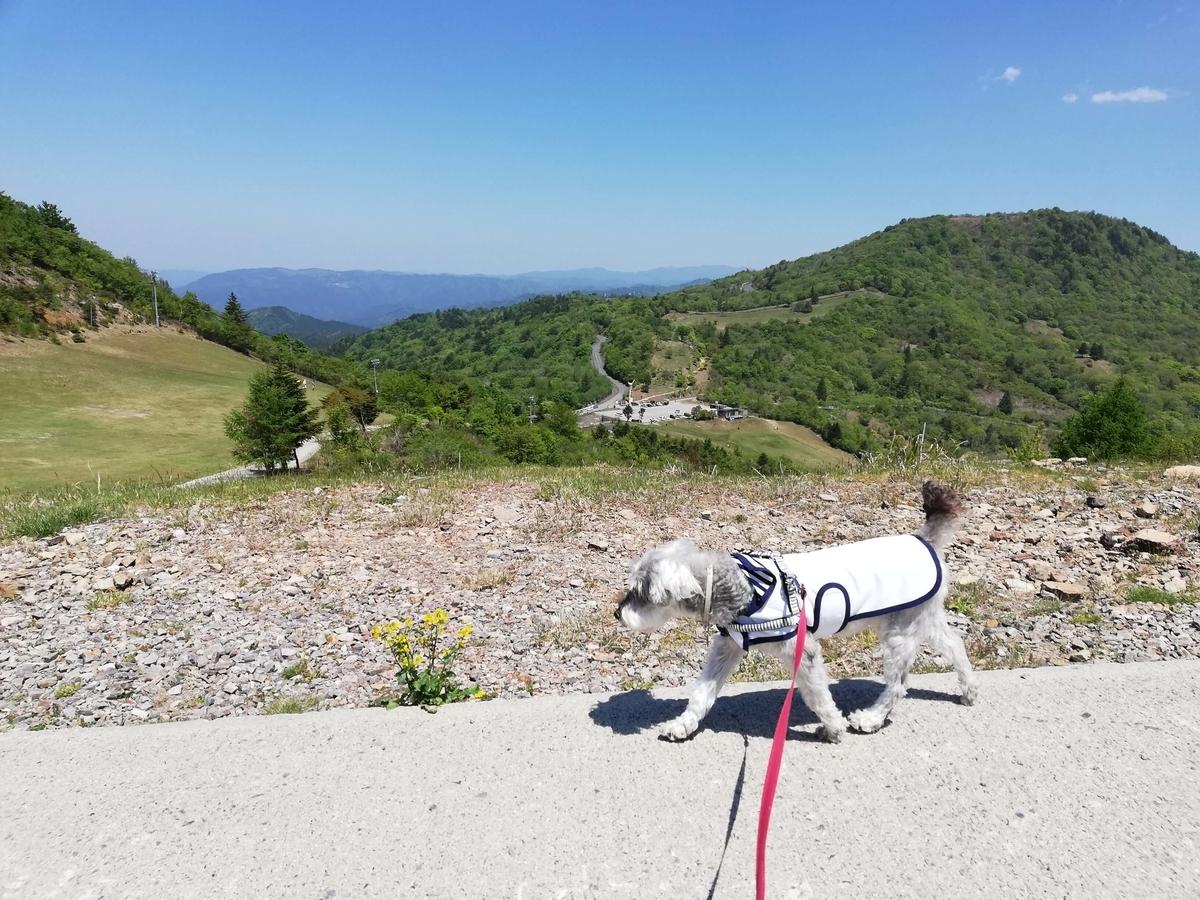 愛知県内でペットと遊ぶ:茶臼山高原