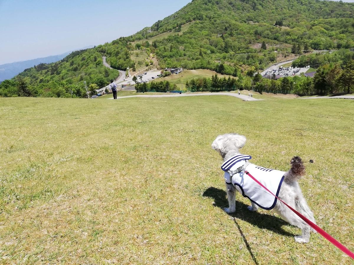 愛知県内でペットと遊ぶ:茶臼山高原 ペットと丘をくだる