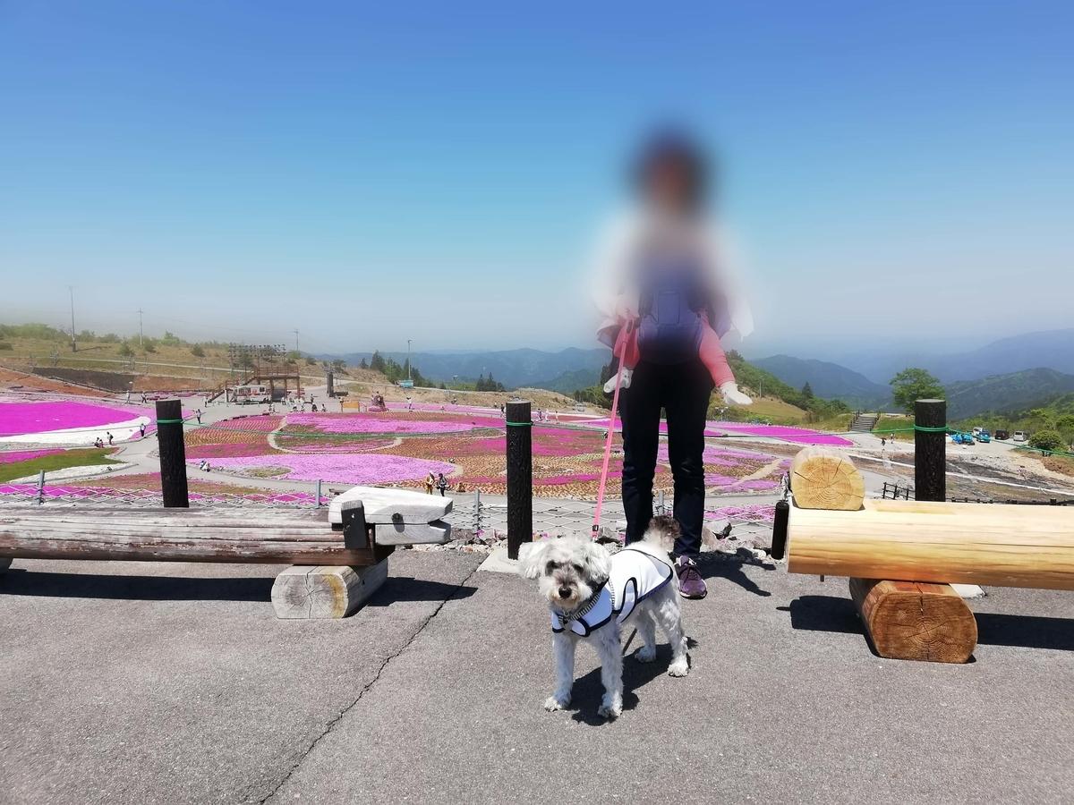 愛知県内でペットと遊ぶ:茶臼山高原 芝桜の丘