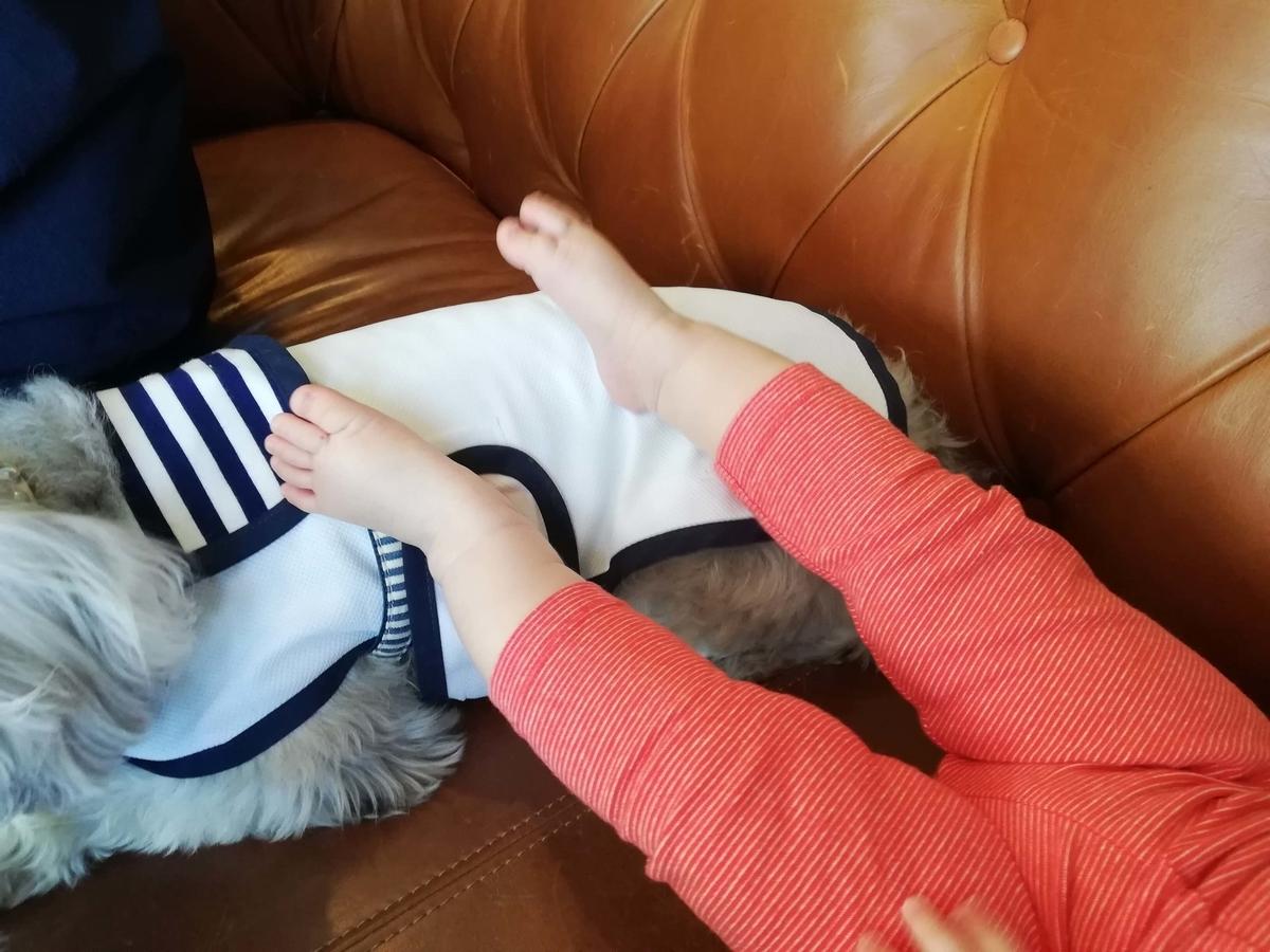 愛知県内ドッグカフェ:5tsubo de marine ソファで赤ちゃんもリラックス