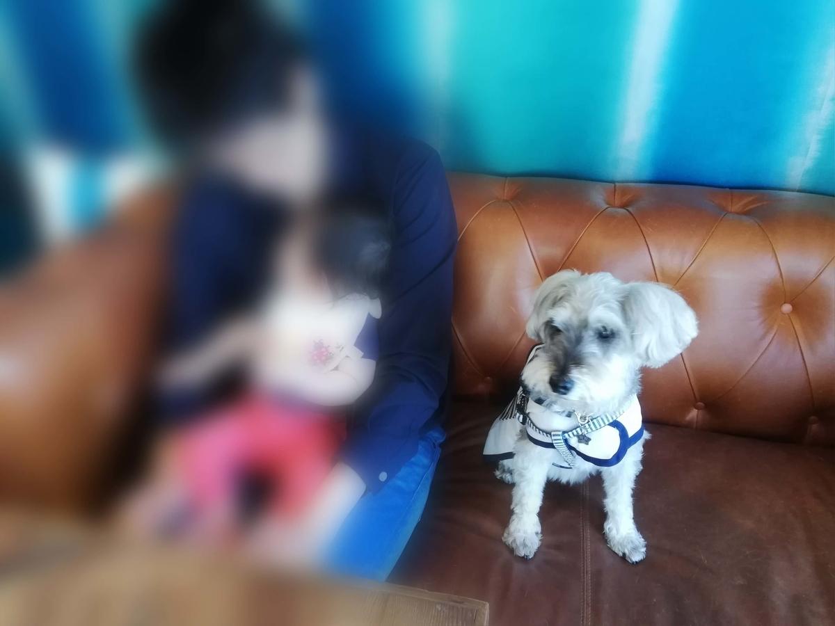 愛知県内でペットと遊ぶ:ドッグカフェ 5tsubo de marine