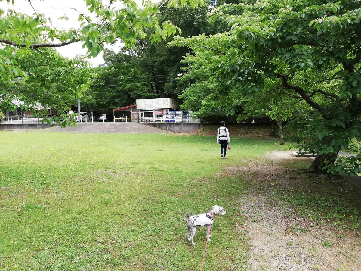 愛知県内でペットと遊ぶ:瀬戸市 定光寺公園 芝生
