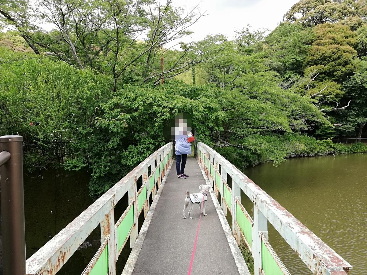 愛知県内でペットと遊ぶ:瀬戸市 定光寺公園 池の周り
