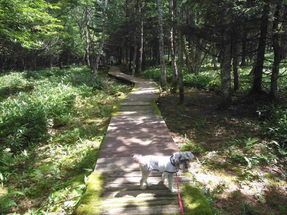 長野県内:ペットと遊ぶ 御泉水自然園