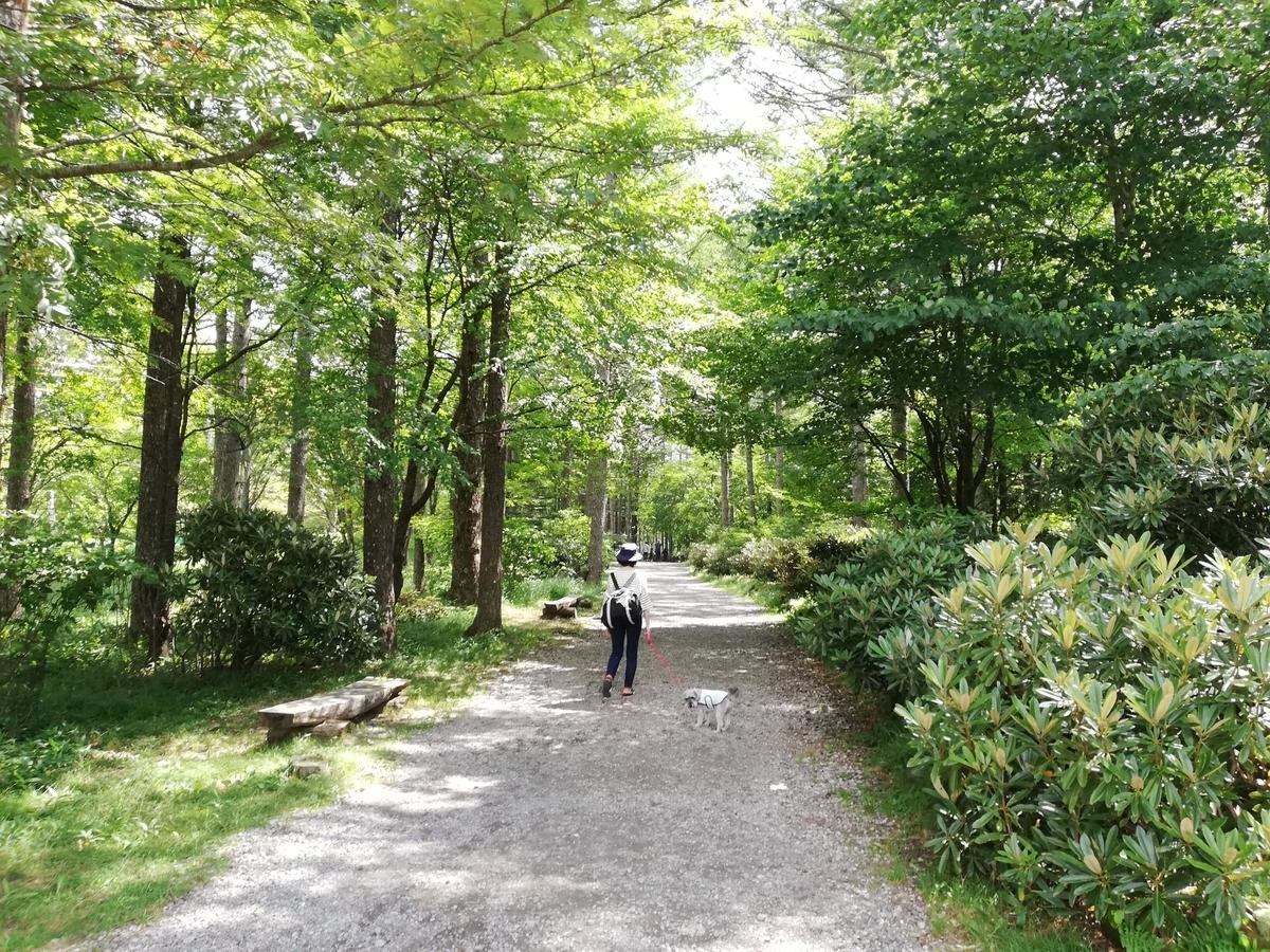 長野県内:ペットと遊ぶ 御泉水自然園 ワンコと散策