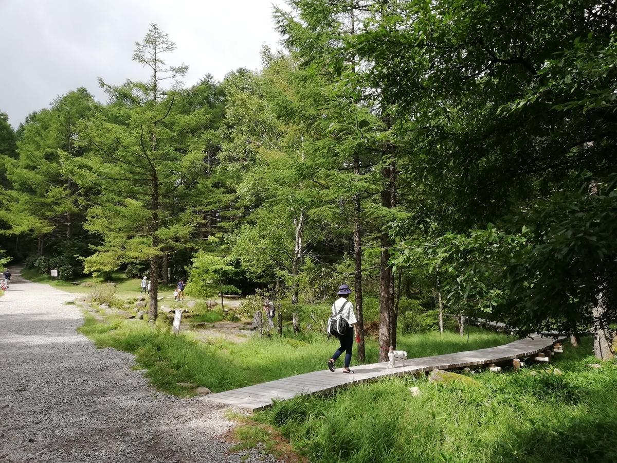 長野県内:ペットと遊ぶ 御泉水自然園 整備された遊歩道