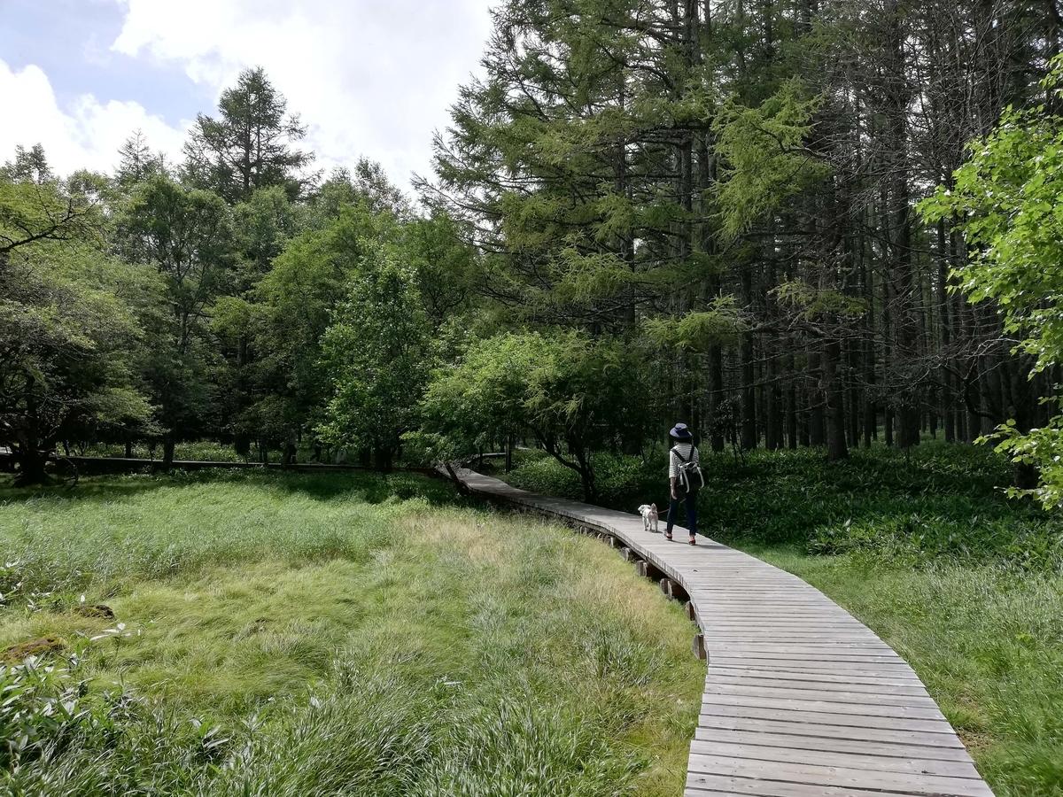 長野県内:ペットと遊ぶ 御泉水自然園 ペットも喜ぶ遊歩道