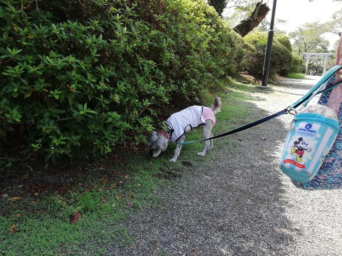 静岡県内でペットと遊ぶ:矢奈比賣神社 ワンコと散策