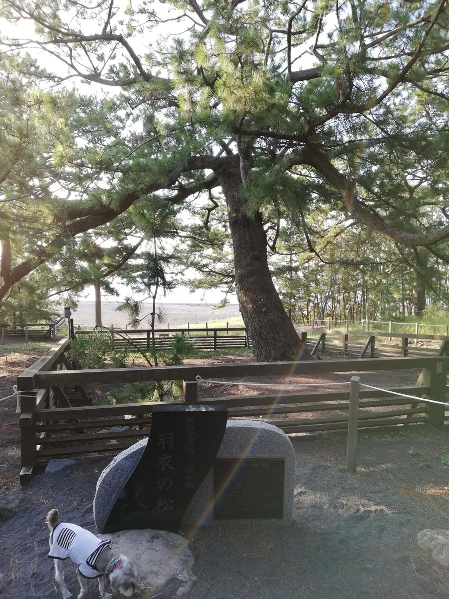 静岡県内でペットと遊ぶ:三保の松原 ミニチュアシュナウザーと羽衣の松