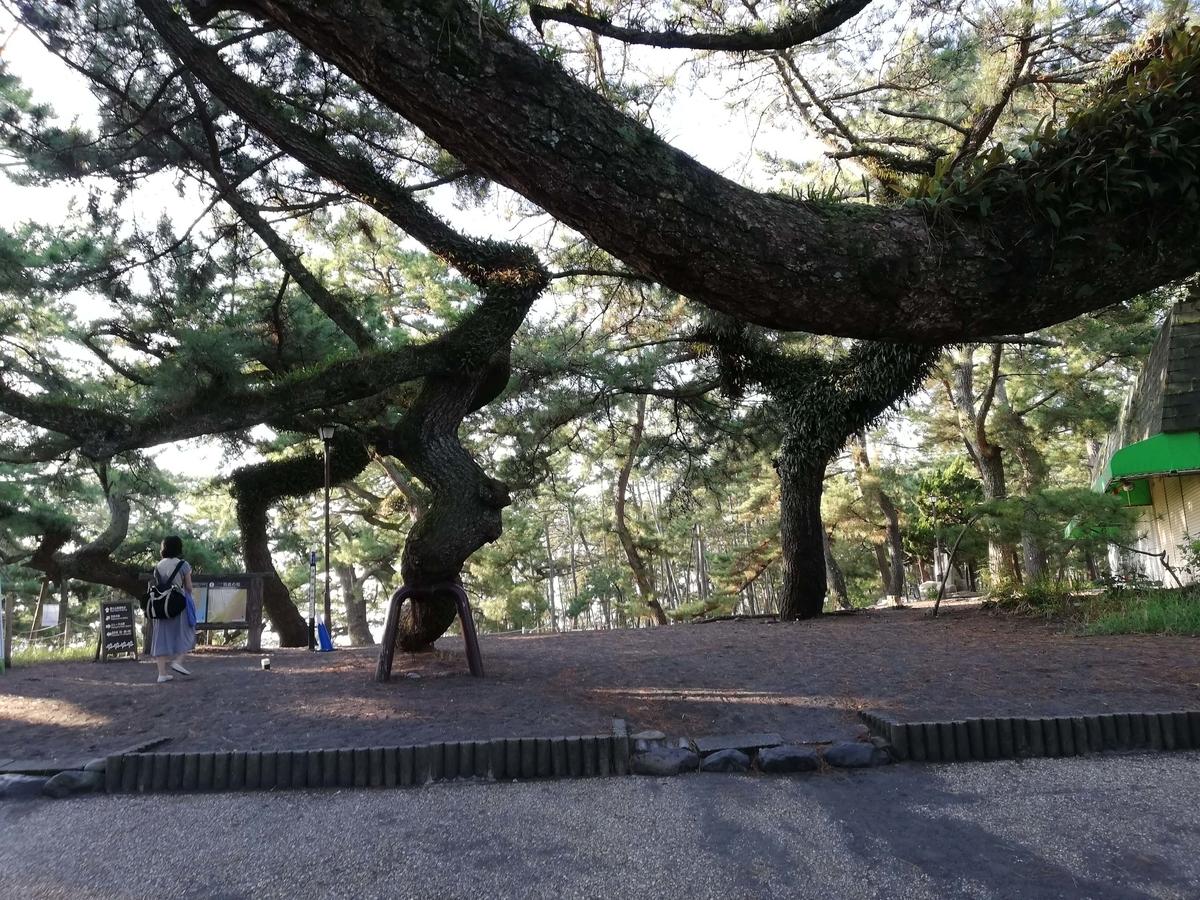 静岡県内でペットと遊ぶ:三保の松原 横に長い松