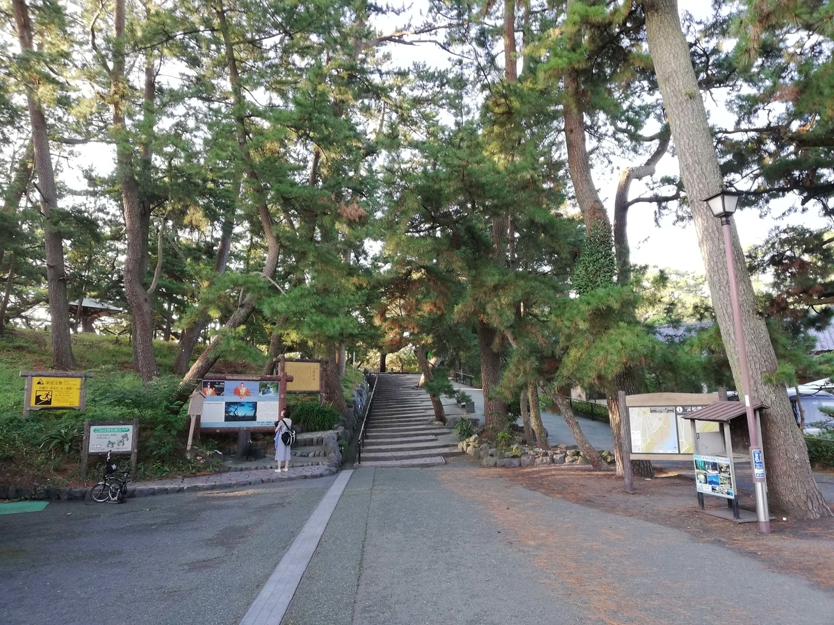 静岡県内でペットと遊ぶ:三保の松原 松林