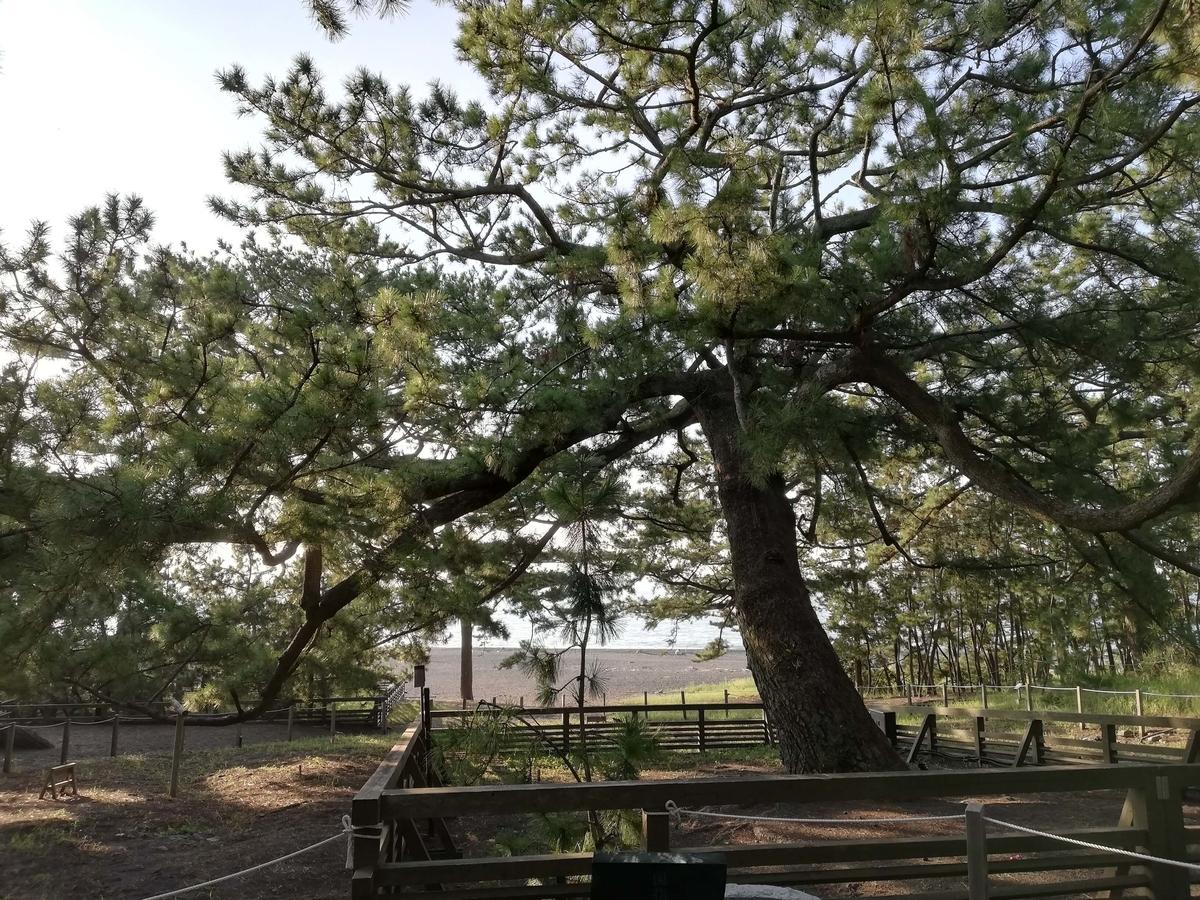 静岡県内でペットと遊ぶ:三保の松原 羽衣の松