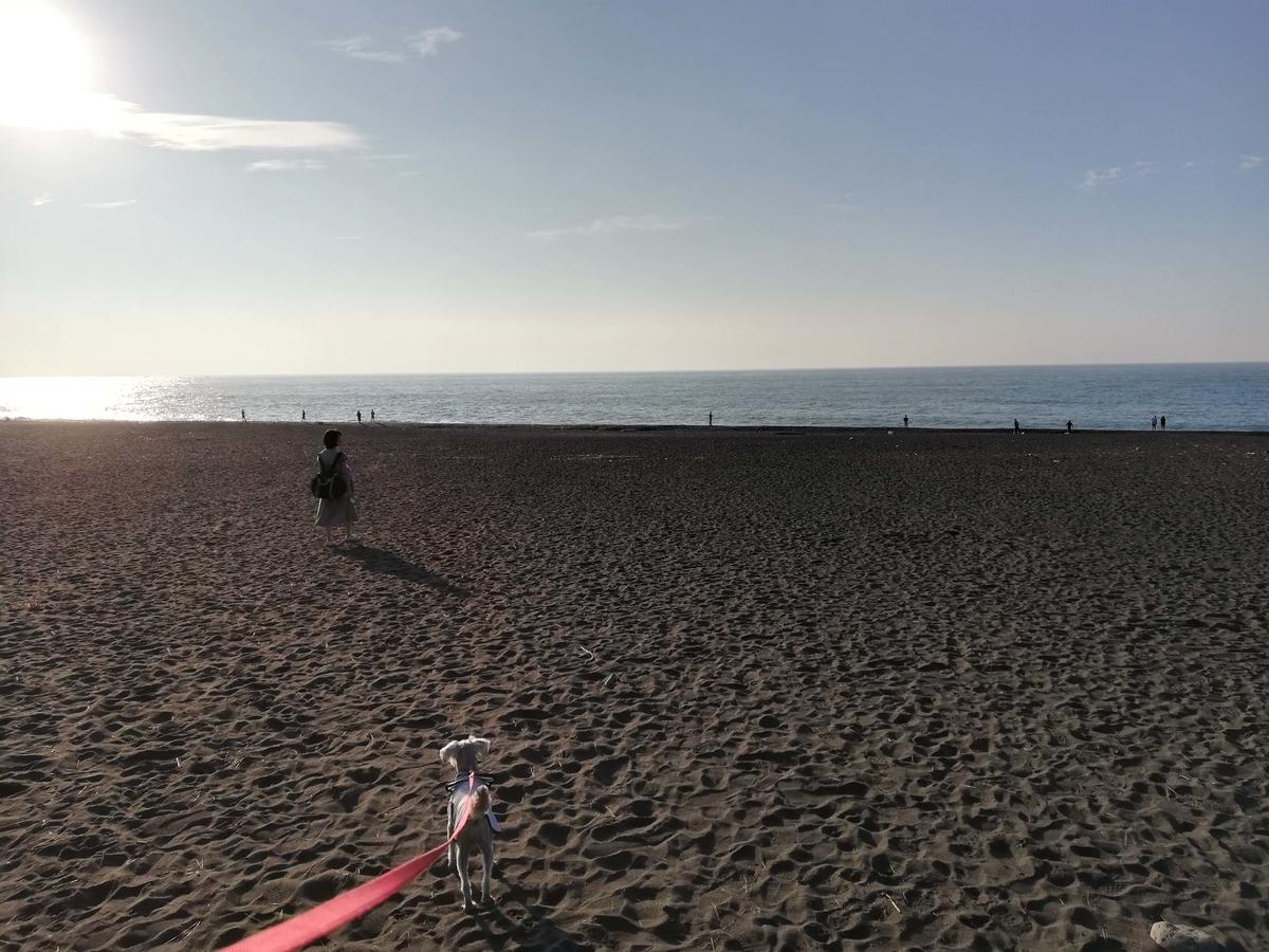 静岡県内でペットと遊ぶ:三保の松原 ミニチュアシュナウザーと海岸線