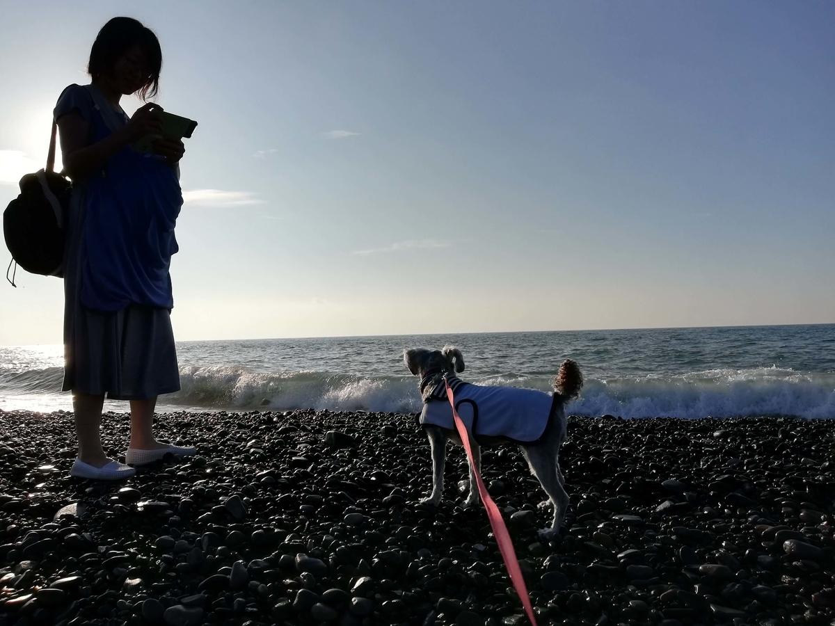 静岡県内でペットと遊ぶ:三保の松原