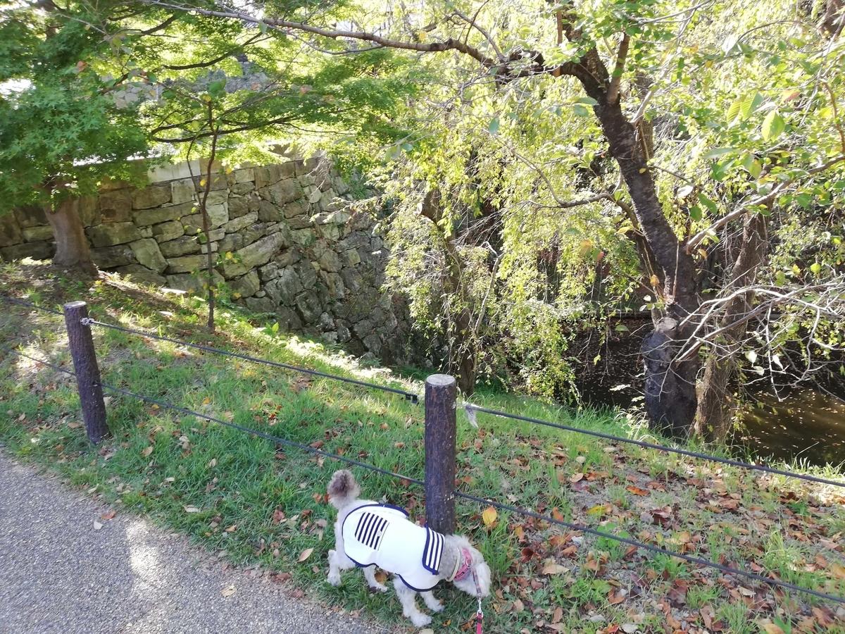 長野県内:ペットと遊ぶ 上田城跡公園 お堀の周りを散歩
