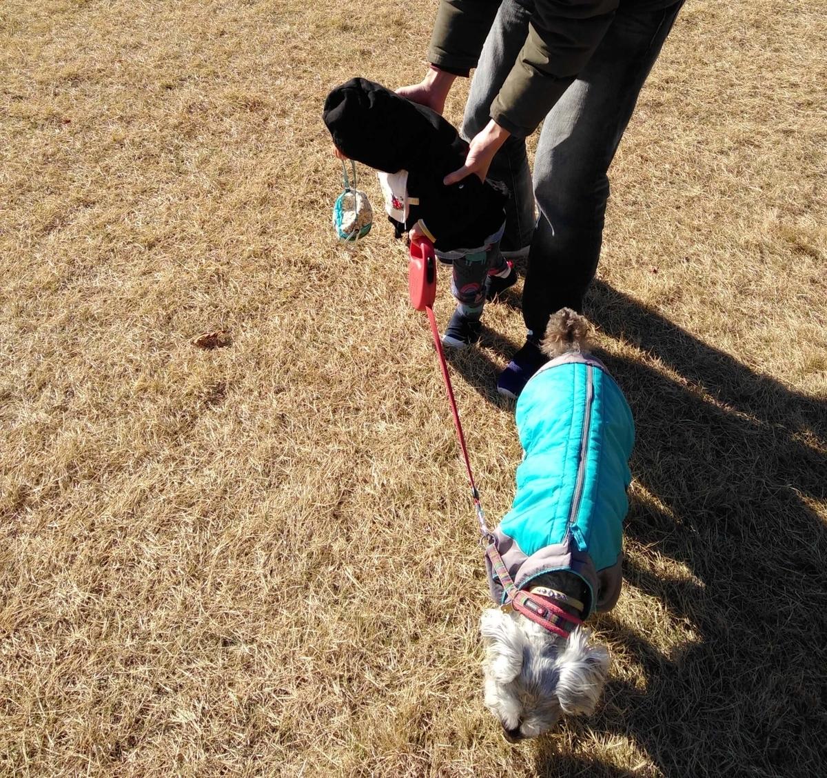 愛知県内でペットとお出かけ:愛知県森林公園 子どもとワンコ