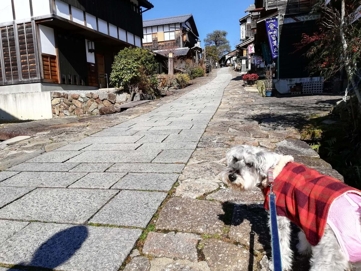 岐阜県内でペットと遊ぶ:岐阜県中津川市 馬籠宿