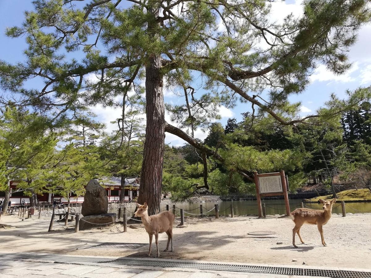 奈良県内でペットとお出かけ:奈良公園 鹿に遭遇
