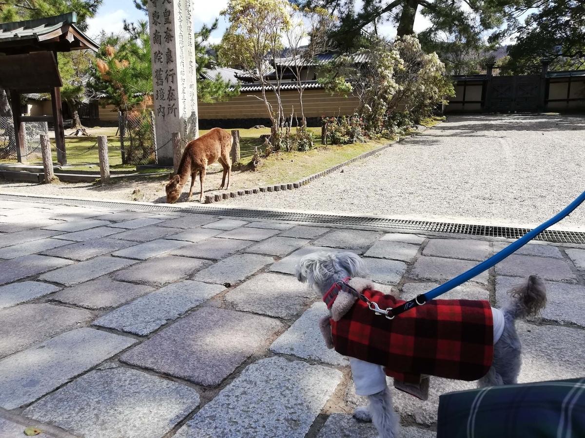 奈良県内でペットとお出かけ:奈良公園 鹿とワンコ