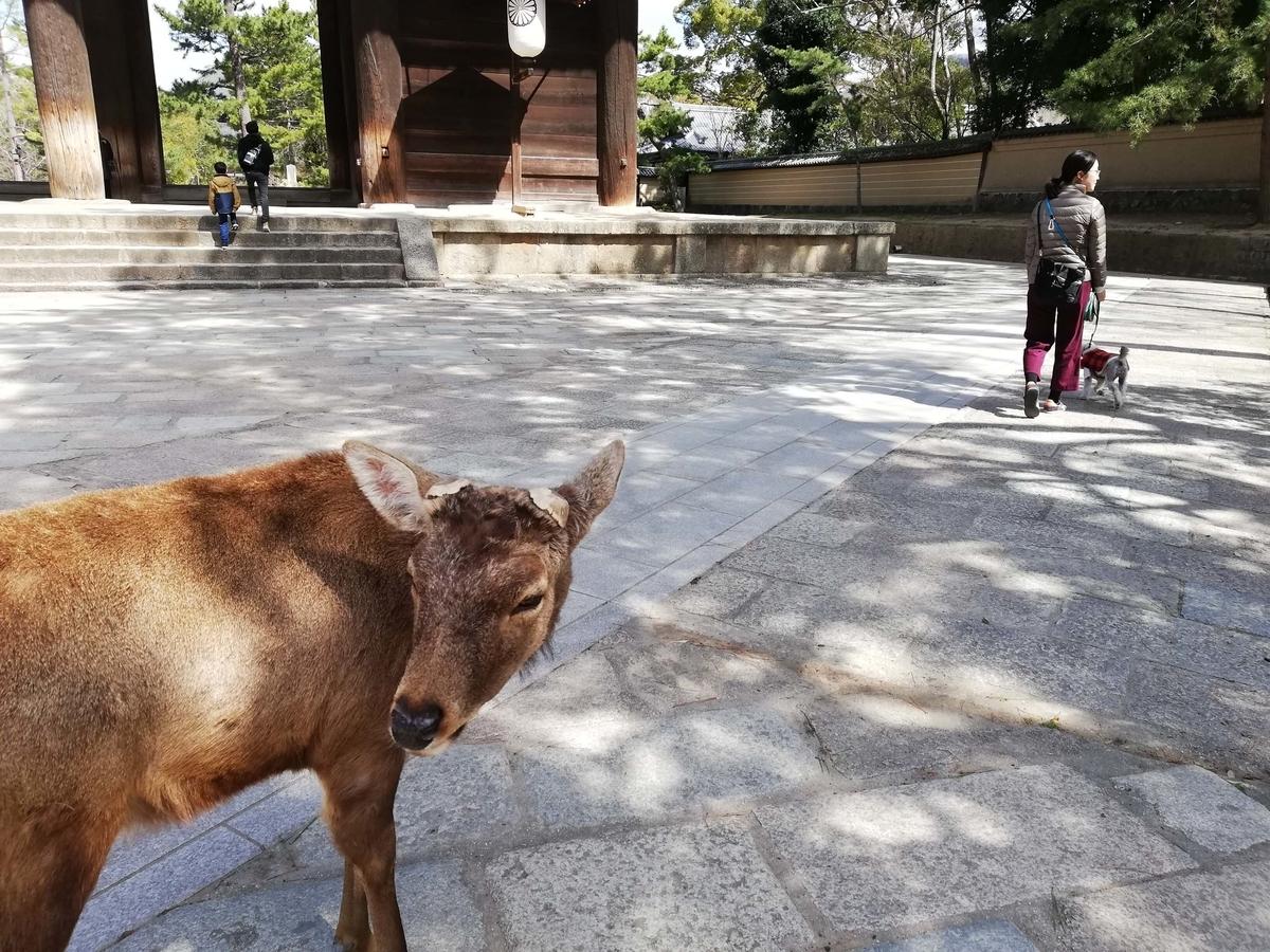 奈良県内でペットとお出かけ:東大寺 鹿 ワンコ