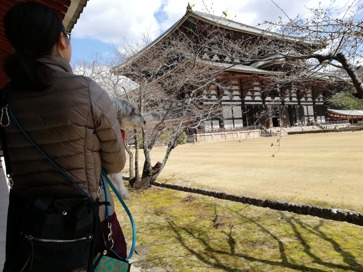 奈良県内でペットとお出かけ:東大寺 ワンコ 桜