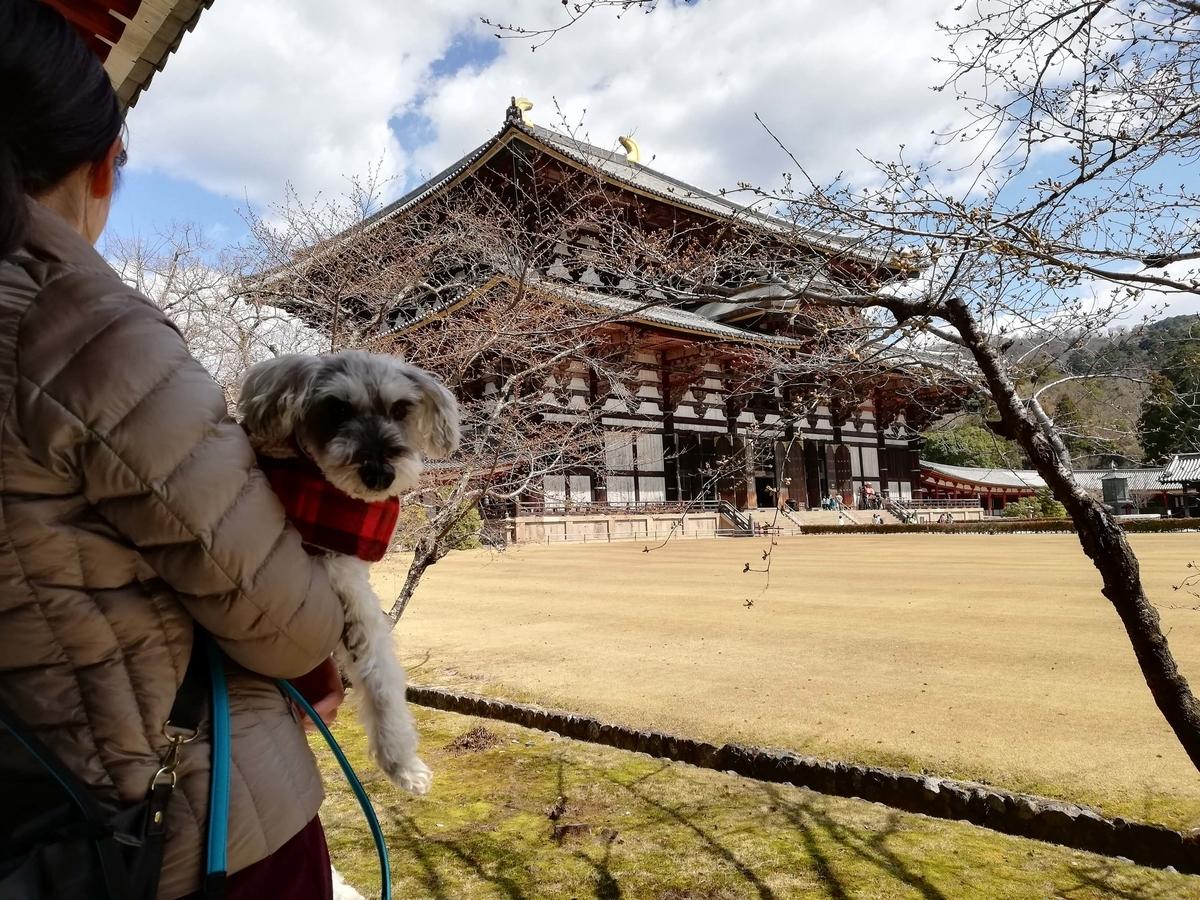 奈良県内でペットとお出かけ:東大寺 大仏殿 ワンコ