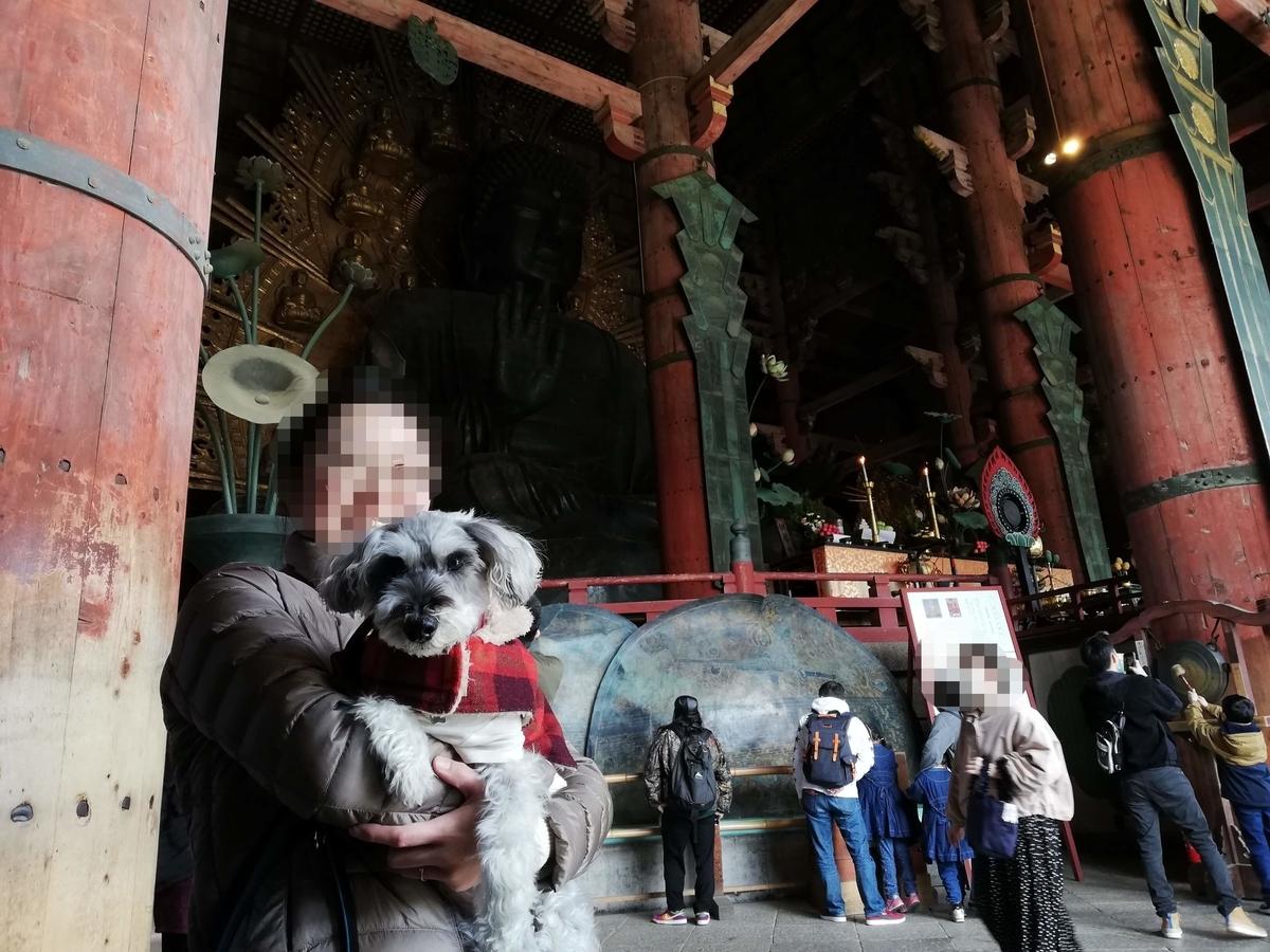 奈良県内でペットとお出かけ:ワンコと大仏様