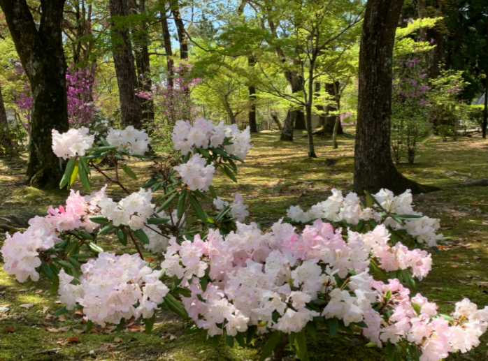 仁和寺の庭は花でいっぱい