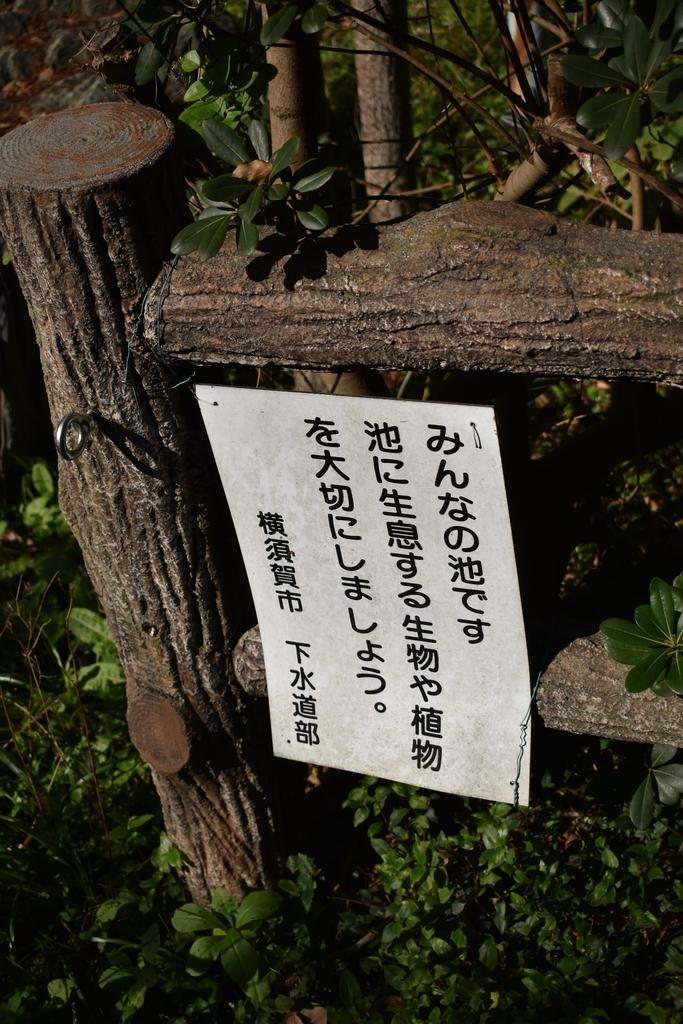 f:id:haniwakai:20181111004010j:plain