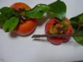 枝つきの柿
