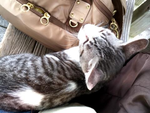 f:id:hanna-cats:20161012020630p:plain