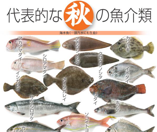 f:id:hansoku365:20160818182221p:plain