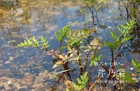 f:id:hansoku365:20180105095523p:plain