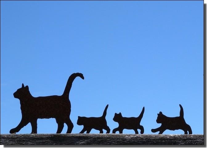 猫ファミリー行進