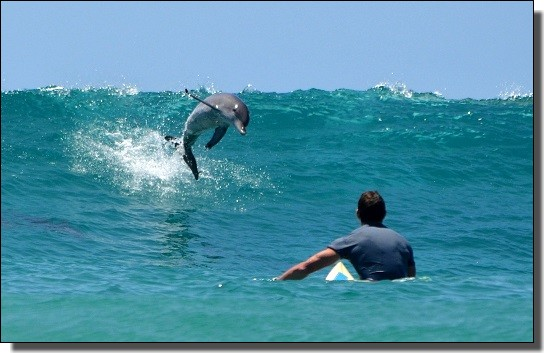 イルカとサーフィン