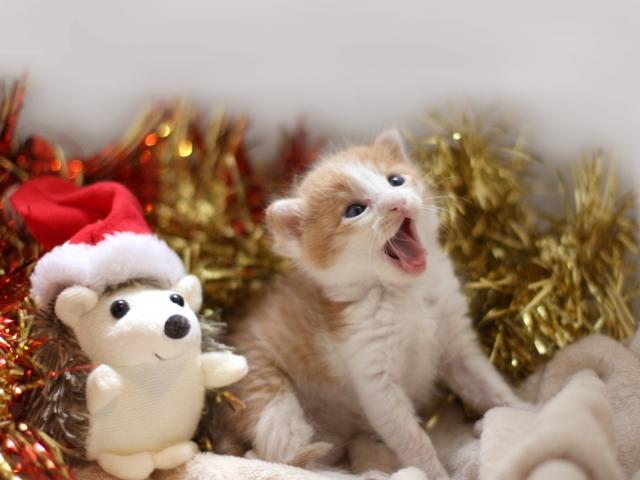 クリスマス,we wish you a merry christmas,おめでとうクリスマス,オルゴール,フリー素材