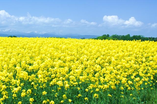 春のフリー素材音楽ポップ曲